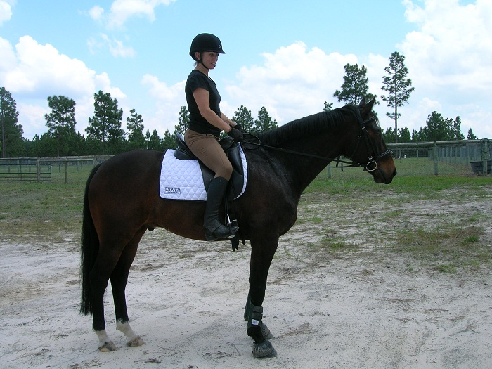 Imported from Holland: Just Louis, a Dutch Warmblood KWPN gelding