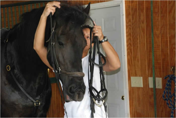 I'll help you with the bridle if you just hold it steady